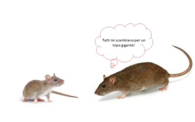 TOPI E RATTI: RODITORI COMMENSALI